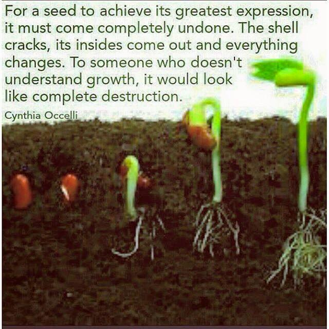 43-become-a-seed-and-then-grow