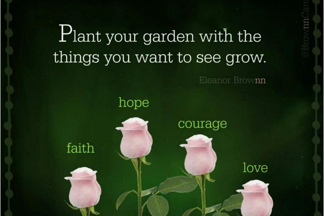 4 seeds to plant within you